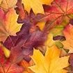 Sounds-of-Autumn