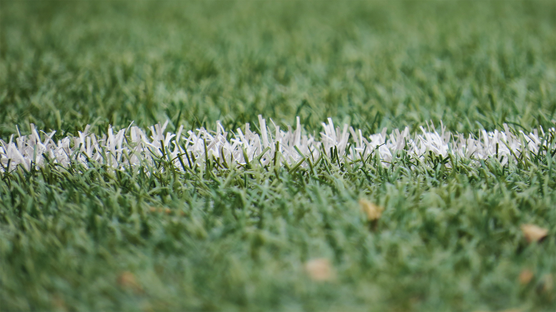 Ground-level view of a grass field and white painted stripe