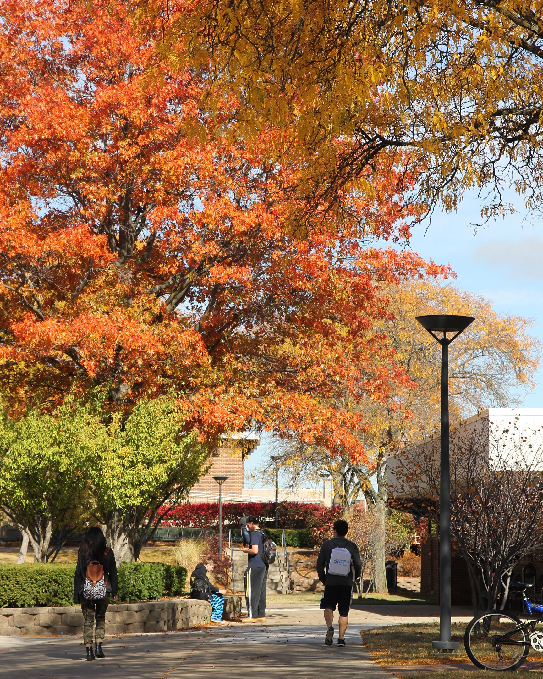 Students on campus in autumn